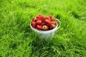 Ripe strawberry in bucket — Stock Photo