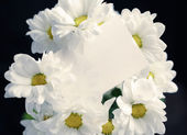 Chrysanthemum with blank card — Foto de Stock