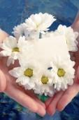 Chrysanthemum with blank card — Zdjęcie stockowe