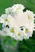 Chrysanthemum with blank card — Stock Photo