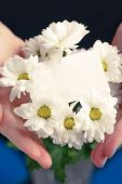Chrysanthemum with blank card — Foto Stock