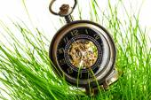 Vintage pocket watch in green grass — Fotografia Stock