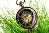 Vintage pocket watch in green grass — Zdjęcie stockowe