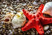 Seastar and seashells on pebbles — Stock Photo