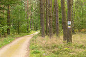 Designation of forest trails — Stock Photo