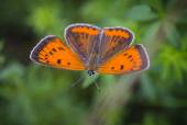 Orange butterfly resting on the grass — Stock Photo