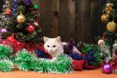 White cat playing  Christmas tree — Stock Photo