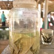 Постер, плакат: Albino turtles in glass jar at Sea Turtle Farm and Hatchery