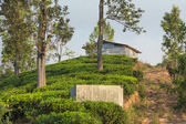 Small shed on hill at world famous tea plantation in Ella. — Stock Photo