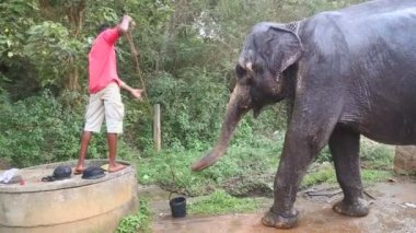 Man die geeft olifant wat water — Stockvideo