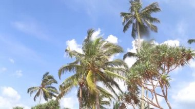 Sky view of palm trees in the light wind and clouds passing by. — Stock Video