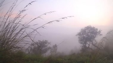Foggy sunrise on the Little Adam's Peak — Stock Video