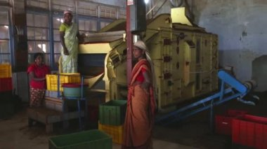 Women working on a machine in the tea factory — Stock Video