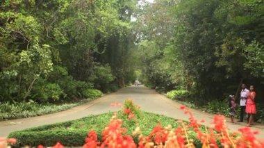 Botanical gardens — Stock Video