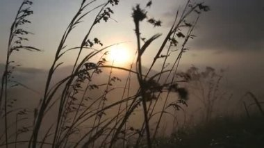 Long grass in the wind at sunrise — Stok video