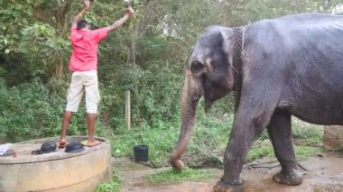 Man giving elephant some water — Video Stock
