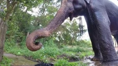 Mahout taking water from well in bucket and elephant spraying itself refreshingly. — Stock video