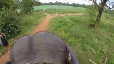 Aerial view of elephant ride with head and flapping ears, chain around neck — Stock Video