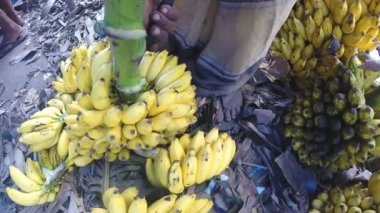 Man preparing bananas for the sale — Stock Video