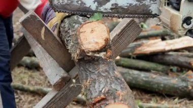 Chainsaw cutting firewood for the winter period — Stock Video