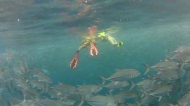Person swimming among jack fish — Stock Video