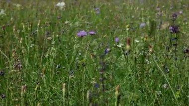 Wild flowers in field in countryside — ストックビデオ