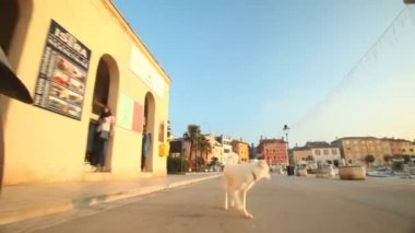 Man cycling on road in Rovinj — Stock Video