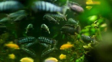 Fish swimming in aquarium — Stock Video