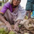 Elderly Indian woman selling vegatables — Stock Photo #72504907