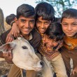 Boys from Rabari tribe and calf pose. — Stock Photo #76402591