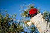 Tribesman holds traditional axe — Fotografia Stock