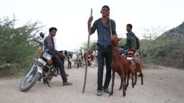 Cattle keepers on rural road — Stock Video