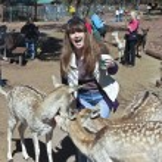 A Woman Has Fun Feeding the Deer — Stock Photo #56165965
