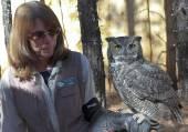 A Great Horned Owl at Bearizona, Williams, Arizona — Stock Photo