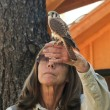 Постер, плакат: A Kestrel and Trainer at Bearizona Williams Arizona