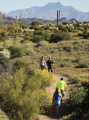 A Trail into the Superstition Mountain Wilderness — Foto de Stock