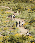 A Trail into the Superstition Mountain Wilderness — ストック写真