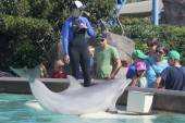 A Dolphin Entertains Visitors at Dolphin Point — Stock Photo