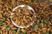 Fired silk worm — Stock Photo