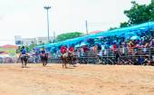 143th Buffalo Racing Festival on October 7, 2014. — Stock Photo