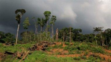 Jungle Deforestation — Stock Video