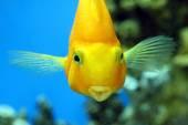 Fish parrot — Stockfoto
