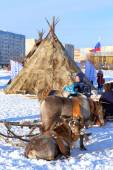 Deer and plagues of Nenets against the city — Stock Photo
