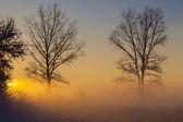 Winter landscape at sunset — Stock fotografie