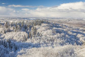 The observation tower on a hill in the winter forest — Stockfoto