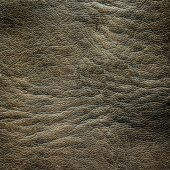 Wrinkled leather texture. — Stock Photo