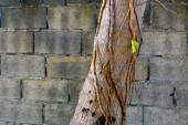 Abstract image of palm trees on a background of a brick wall — 图库照片