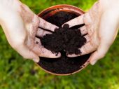 Gardening, planting litle tree in a flower pot — Stock Photo