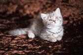 Newborn kittens in a wicker basket — Stock Photo