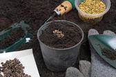 Gardening tool — Stock Photo